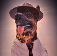 Sheriff Dog